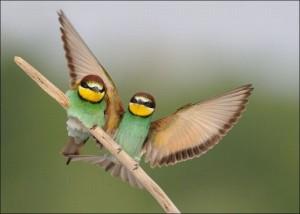 stendere-le-ali-per-volare