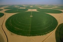 Agricoltura in Arabia Saudita immaginidivertenti.org