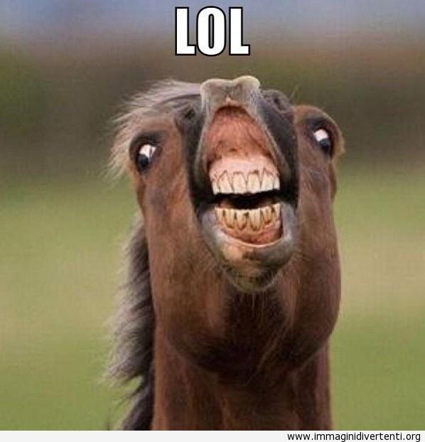 Immagini divertenti Cavallo-divertente