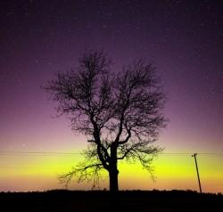 Luce polare ed albero immaginidivertenti.org