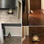 Ecco cosa fa il mio gatto tutto il giorno