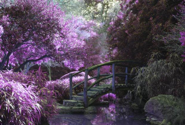 Giardino Misterioso con una ponte