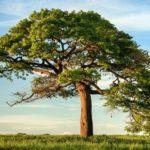 albero-verde-foglia-sotto-il-cielo-blu